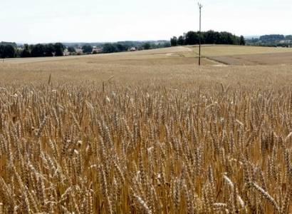 Komunikat Burmistrza Nowogrodźca - Susza Rolnicza na terenie Gminy Nowogrodziec